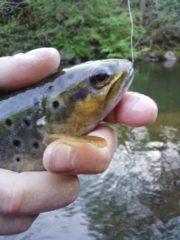 Pêche à la truite, comment la pratiquer en bonne et due forme ?
